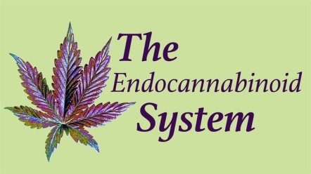 Endocannabinoid_System